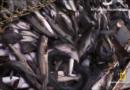 Peixes podem desaparecer do mercado a médio prazo, saiba por que
