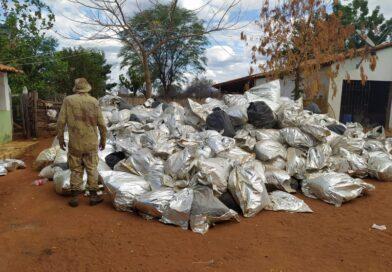 PM apreende 8 mil quilos de maconha no interior da Bahia mas nenhum suspeito é preso